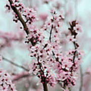 Pretty Pink Flowering Tree Poster