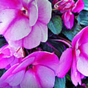 Pretty Pink Flowers Poster