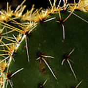 Prickly Pear Dangerous Beauty - Greeting Card Poster