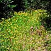 Priest Lake Trail Series Iv - Small Meadow Poster
