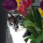 Princess The Cat And Tulips Poster