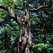 Princess Tree Poster
