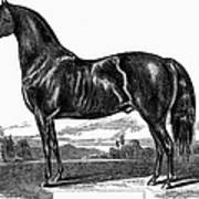 Prize Horse, 1857 Poster