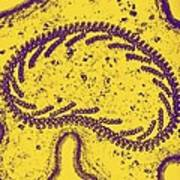 Protozoan Tentacle,tem Poster by