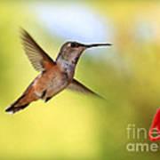 Proud Hummingbird Poster