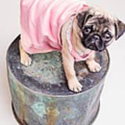 Pug Puppy Pink Sun Dress Poster