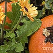 Pumpkin And Gerberas Poster