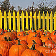 Pumpkin Corral Poster