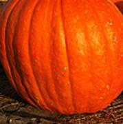 Largest Pumpkin Poster