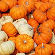 Pumpkin Squash Poster