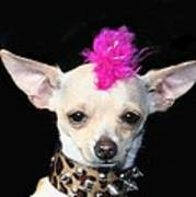 Punk Rock Chihuahua Poster by Ritmo Boxer Designs