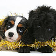 Puppies With Tinsel Poster