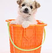 Puppy In Bucket Poster