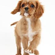 Puppy Trotting Foward Poster