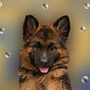 Puppy With Bubbles Poster