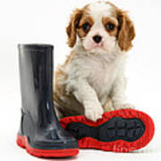 Puppy With Rain Boots Poster by Jane Burton