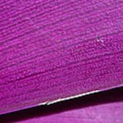 Pure Purple Poster