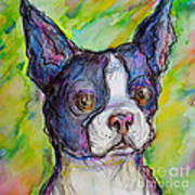 Purple Boston Terrier Poster by M C Sturman
