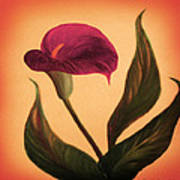 Purple Calla Lily - Square Painting Poster