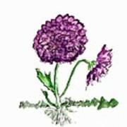 Purple Chrysanthamums Poster