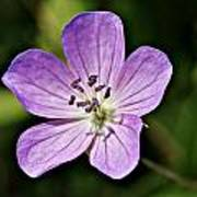 Purple Flower 1 Poster