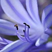 Purple Flower Close-up Poster