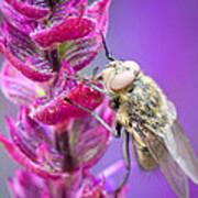 Purple Flower Fly Poster