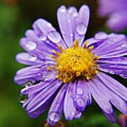 Purple Flower Morning Dew Poster