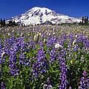Purple Flowers Blooming Beneath Mount Poster