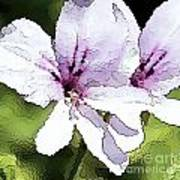 Purple Geranium Poster by Artist and Photographer Laura Wrede