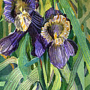 Purple Irises Poster by Mindy Newman