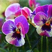 Purple Pansies Poster