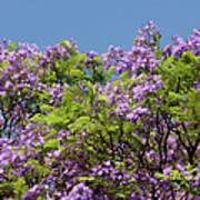 Purple Prelude Poster