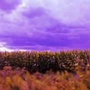 Purple Sky Poster