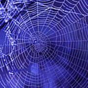 Purple Spiderweb Poster