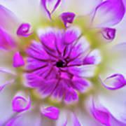Purple Splendor Poster