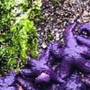 Purple Stars Poster