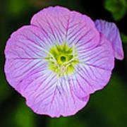 Purple Wildflower Poster