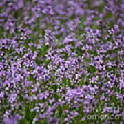 Purple Wildflowers Square Poster