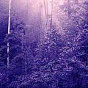 Purple Woods Poster