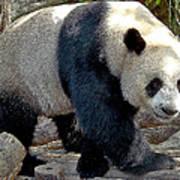 Puttin On The Panda Ritz Poster