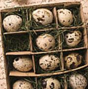 Quail Eggs In Box Poster