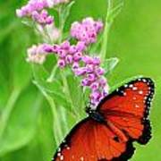 Queen Butterfly And Pink Flowers Poster