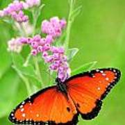 Queen Butterfly Wings With Pink Flowers Poster