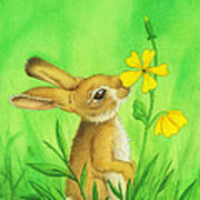 Rabbit And Flower Poster