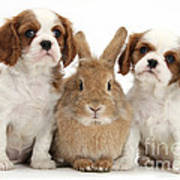 Rabbit And Puppies Poster