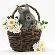 Rabbit In A Basket With Flowers Poster