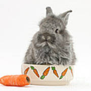 Rabbit In A Food Bowl With Carrot Poster