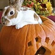 Rabbit Joins The Harvest Poster by Alanna DPhoto