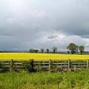 Rain Clouds Over Canola Field Poster